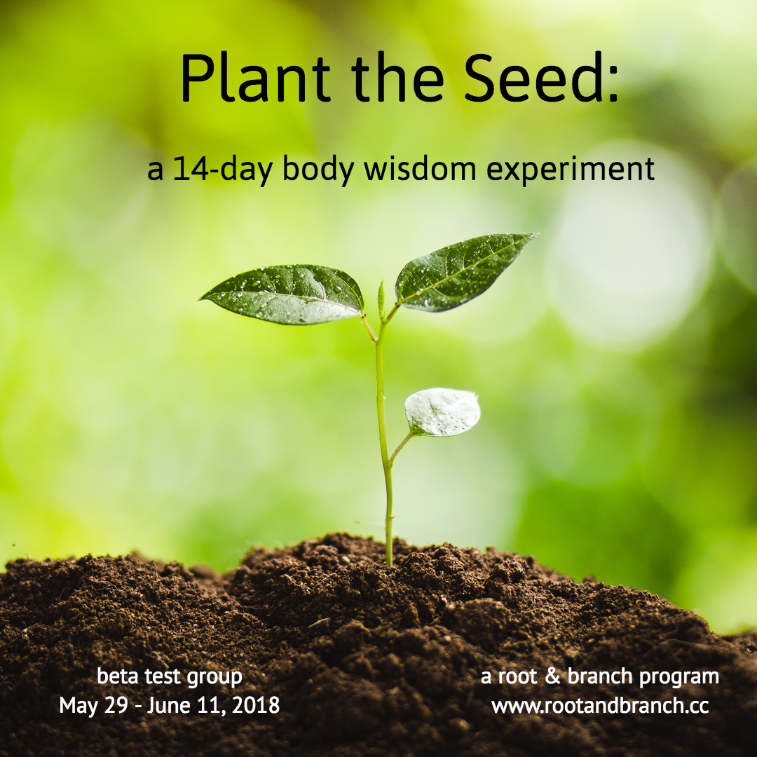 Plant the Seed: a 14-day body wisdom experiment